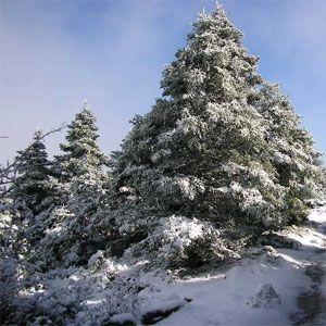 Singles a Sierra de las Nieves
