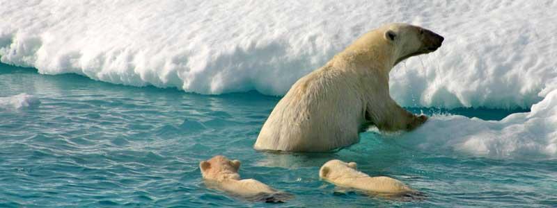 velero Svalbard Noruega: Lo mejor de Svalbard en Velero