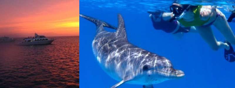 Singles con delfines en el Mar Rojo