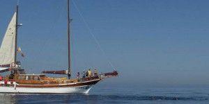 Singles en Navegación y Cetaceos