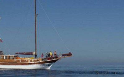 Cetaceos y Navegacion 400x250 Vacaciones Singles