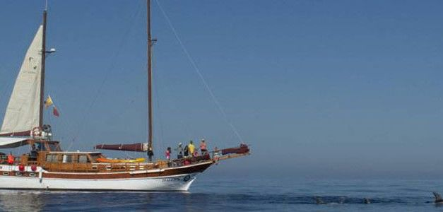 Goleta: Navegación y Cetáceos
