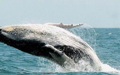 noruega ballenas 400x250 Vacaciones Singles