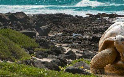 Ecuador Galápagos 400x250 Vacaciones Singles