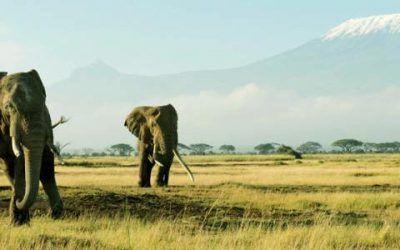 Kenia 400x250 Vacaciones Singles