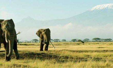Kenia: Reservas y Parques Naturales