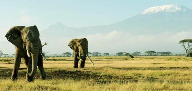 Kenia: Safari Memorias de África