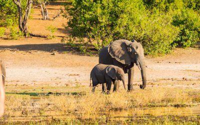 Safari Africa 400x250 Vacaciones Singles