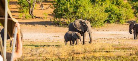 Safari Africa 450x200 Viajes Singles en Diciembre