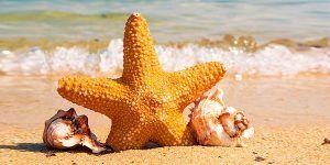 Estrella en playa