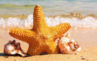 Estrella en playa 400x250 Vacaciones Singles