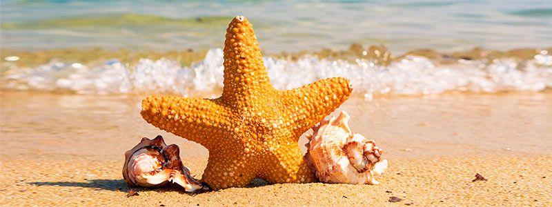 Estrella en playa Singles con Niños