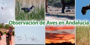 Aves en Andalucia