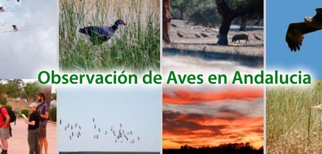 Observación de aves en Andalucia
