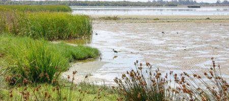 Observacion aves andalucia 450x200 Viajes Singles en Octubre