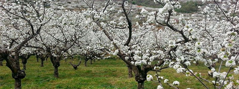 Semana Santa en Valle del Jerte y Extremadura