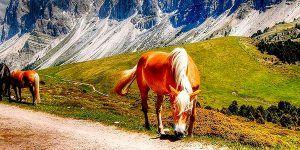 Caballos en Dolomitas 300x150 Calendario de Viajes Singles