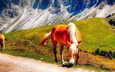 Caballos en Dolomitas 400x250 Vacaciones Singles