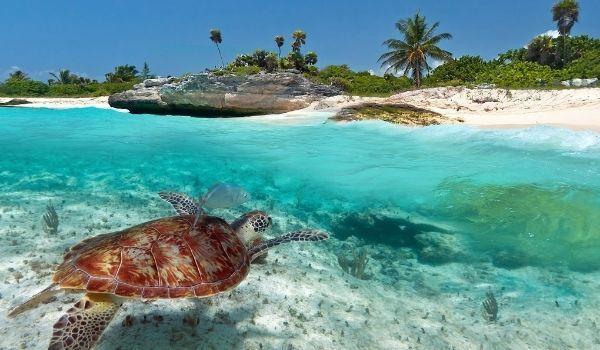Tortuga en Riviera Maya Viajes Singles a Riviera Maya 2021