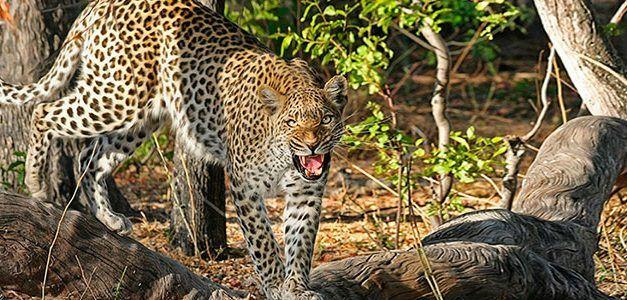 Ruta delta del Okavango 2020