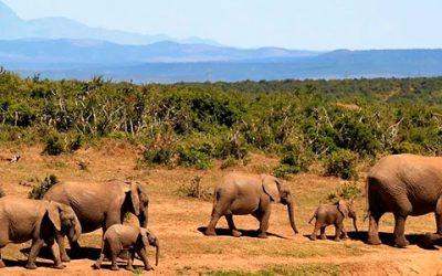 senda de elefantes 400x250 Vacaciones Singles