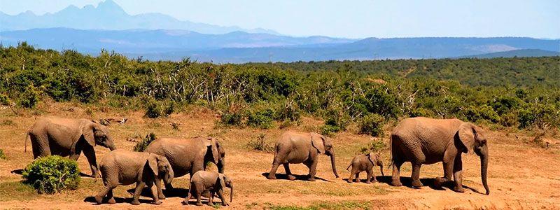 Tras la senda de los elefantes 2020