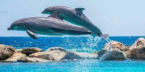 Delfines en Mazarron
