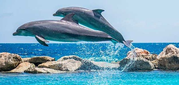 Delfines en Mazarron 627x300 Veleros Singles
