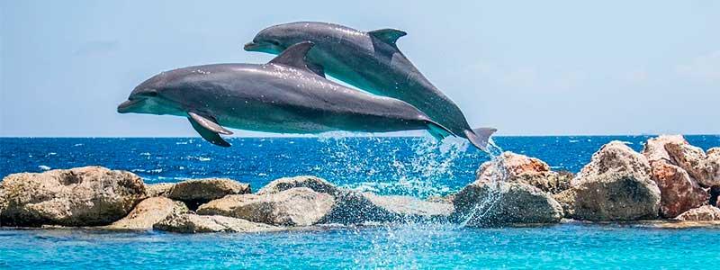 Navegación y Cetáceos en Verano 2020