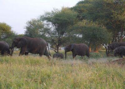 P1050913 400x284 Tanzania