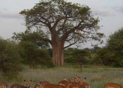 P1050924 400x284 Tanzania