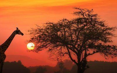 Tanzania viaje singles 400x250 Vacaciones Singles
