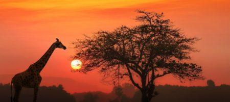 Tanzania viaje singles 450x200 Viajes Singles a África