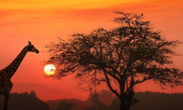 Tanzania, Safari Eco-Sostenible