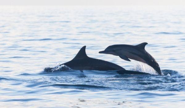 Delfines en Mazarron Navegación y Cetáceos en Verano 2021