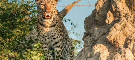 Botswana Singles 450x200 Viajes Singles a África