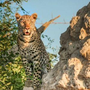 Viaje Singles a Botswana e1634222992987 Viajes para Singles, cruceros y escapadas, viajar solo en grupo