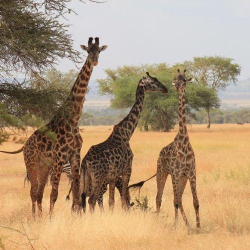 Viaje Singles a Tanzania Viajes para Singles, cruceros y escapadas, viajar solo en grupo